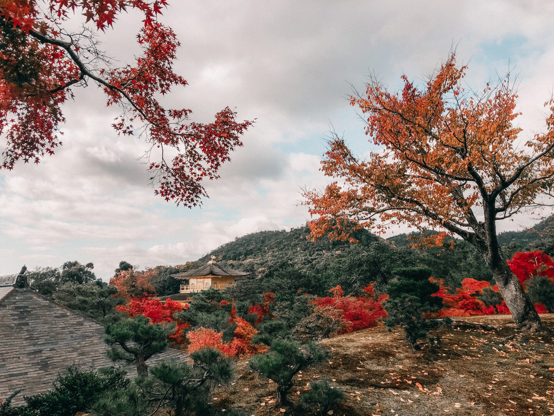 Autumn in kinkakuji